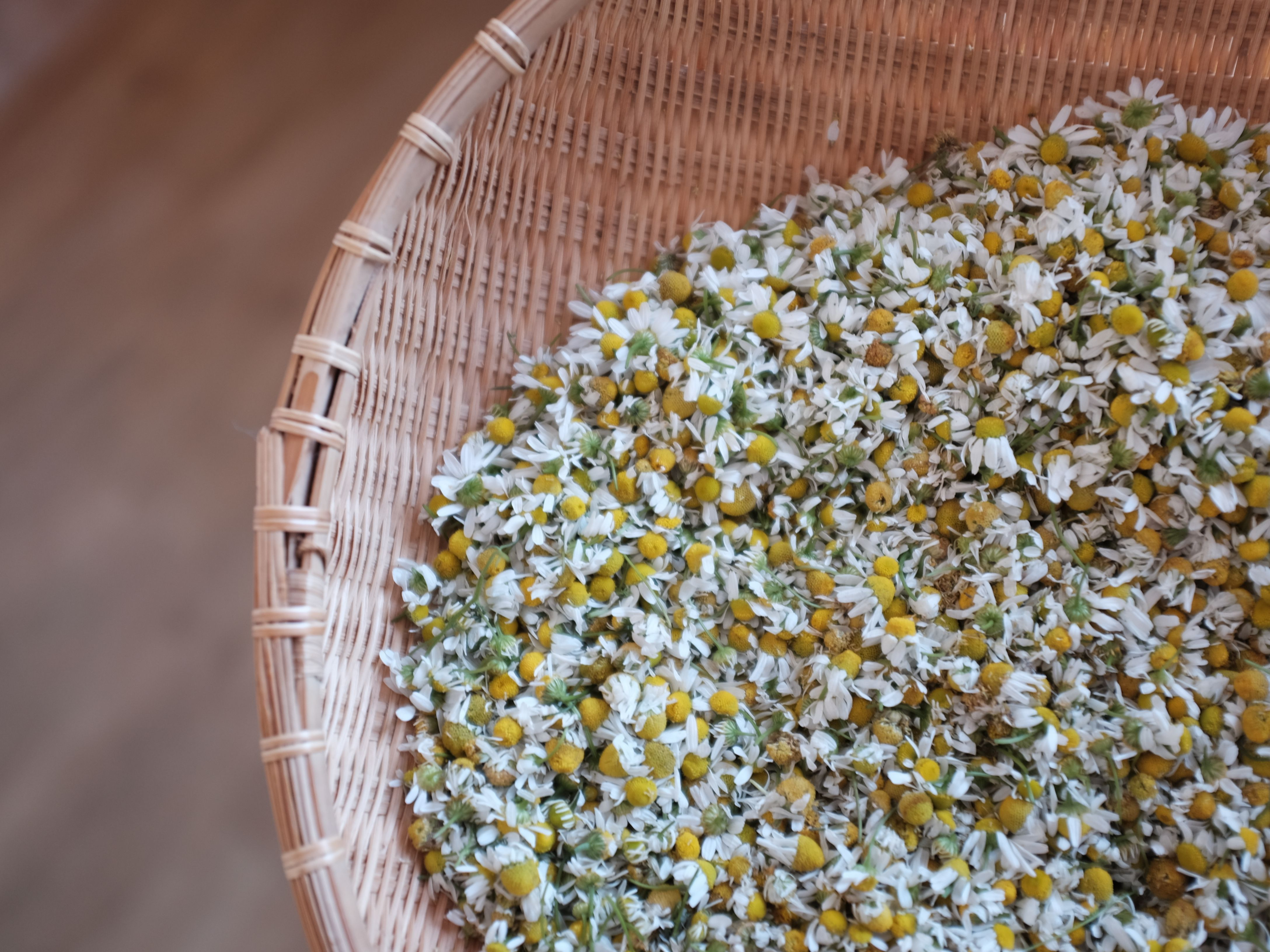 Possible Drug Interactions With Chamomile