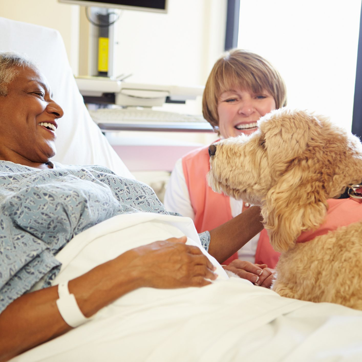 How Animal-Assisted Therapy May Soothe Your Pain
