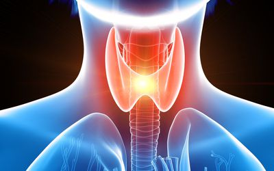 Thyroid Gland Anatomy Function And Treatment