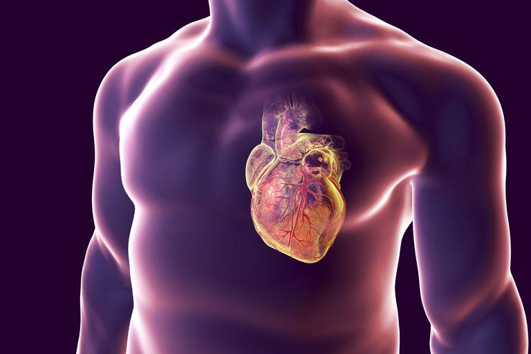 Coronary Arteries illustration