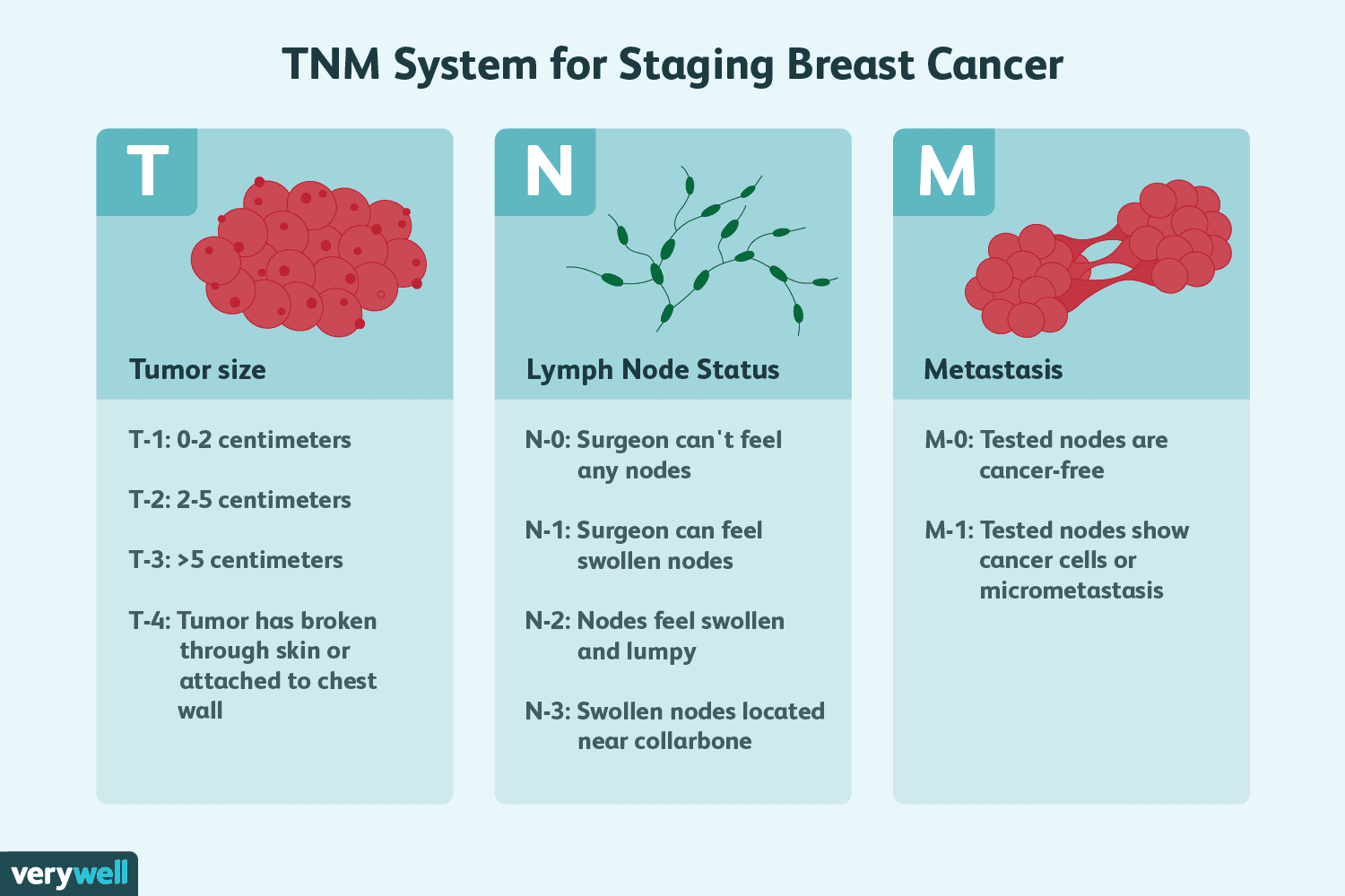 Breast Tumor Size And Staging