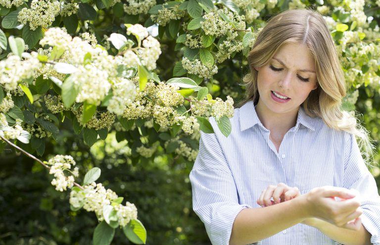 hay fever rash