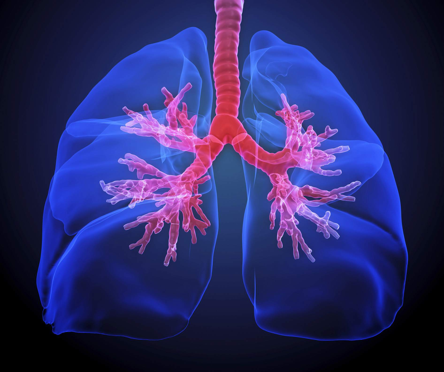 Tour The Respiratory System