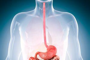 Illustration of esophagus