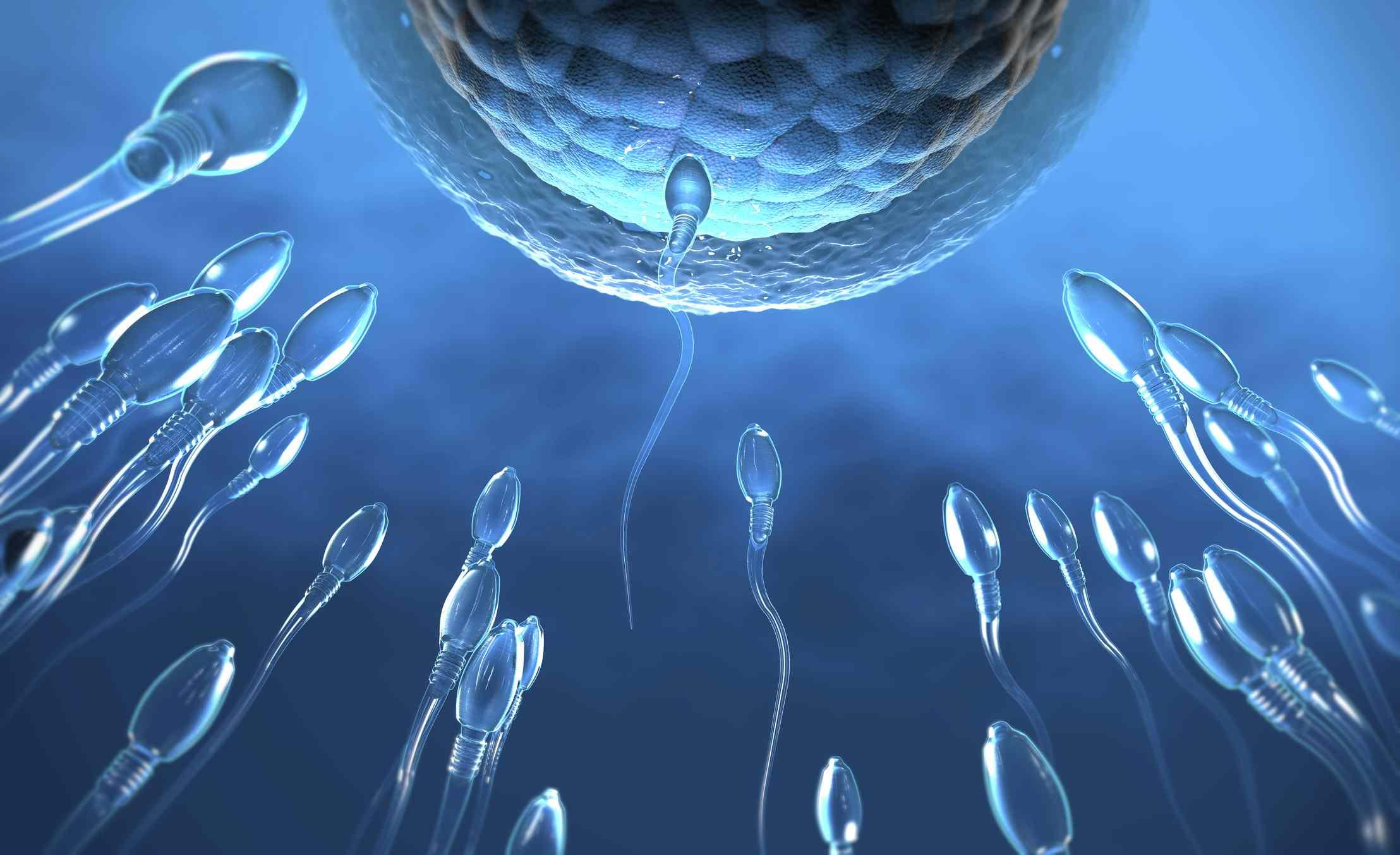 3d illustration of transparent sperm cells swimming toward egg cell
