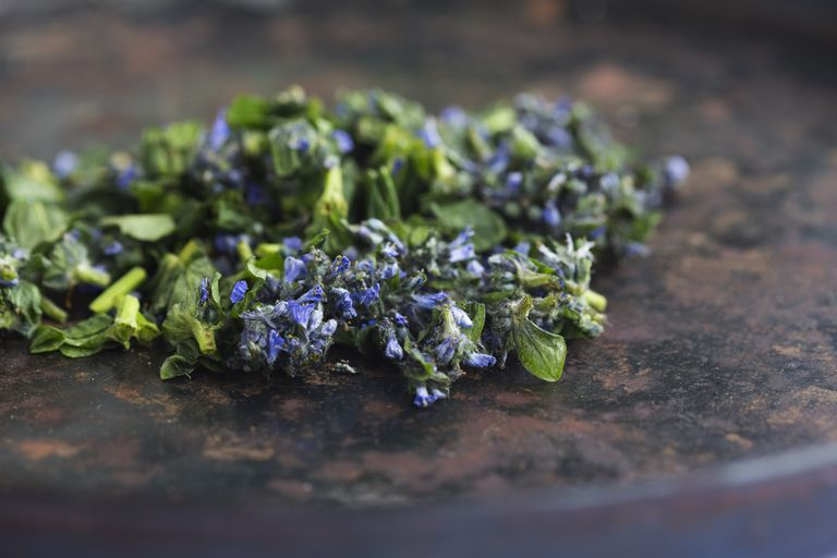 Bugleweed leaves and flowers, harvested and drying