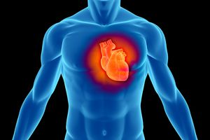 Illustration of a heart in a male torso