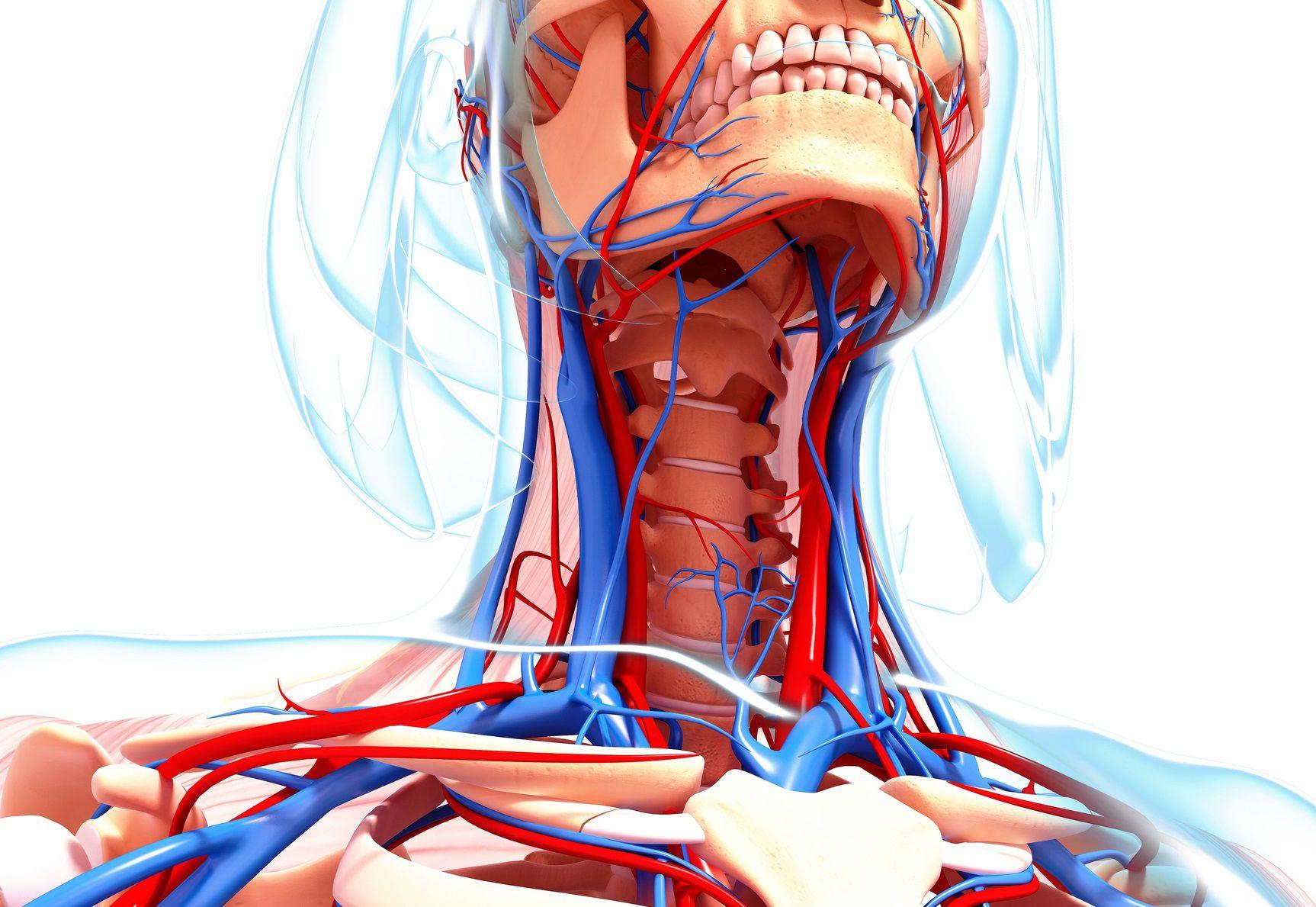 Anatomy  - cover