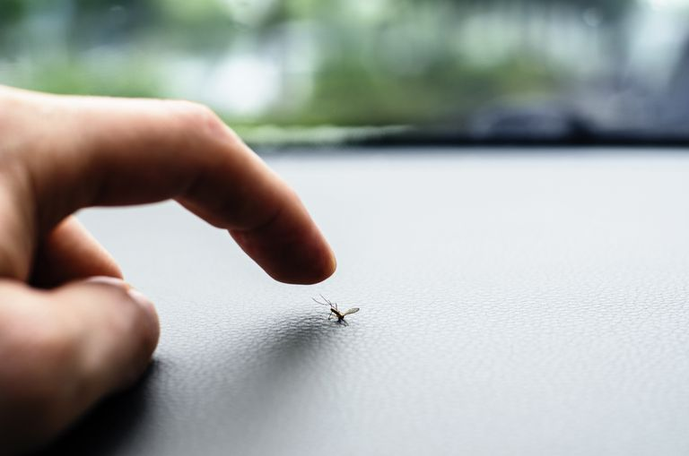 Why Mosquitoes Don't Spread Hepatitis