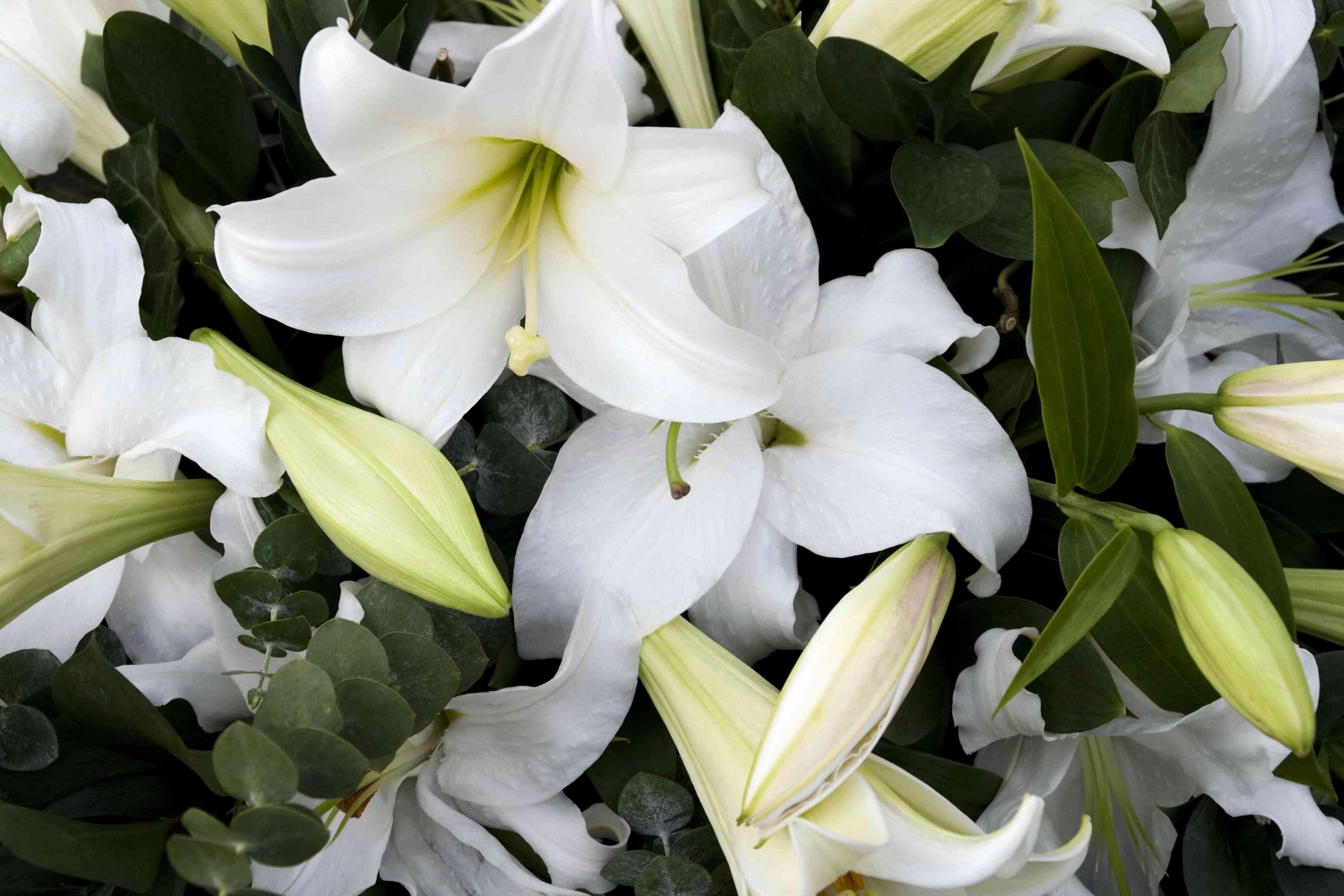 Symbolic Meanings Of Funeral And Sympathy Flowers