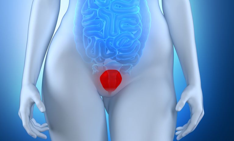 Woman's bladder