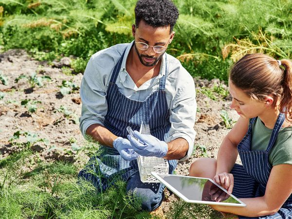 Man and woman in an agricultural field doing soil testing