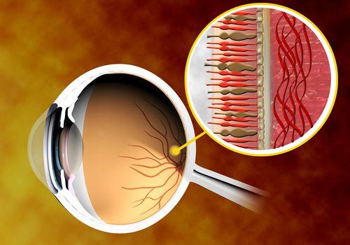 Retina of an eyeball