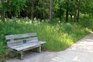 Memorial bench on a walking path