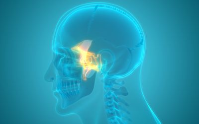 Human Skeleton Skull Parts Sphenoid Bone Anatomy - stock photo