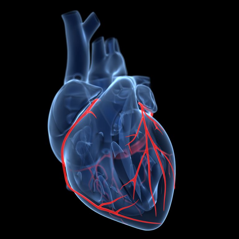 Why The Anatomy Of Coronary Arteries Matters