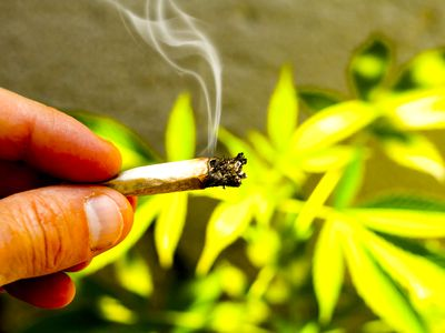 Marijuana joint and plant that can cause a weed allergy