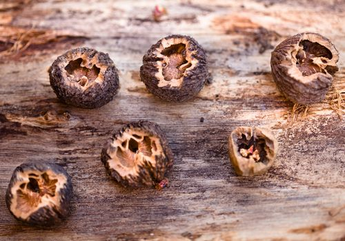 Cracked black walnuts on a wooden table