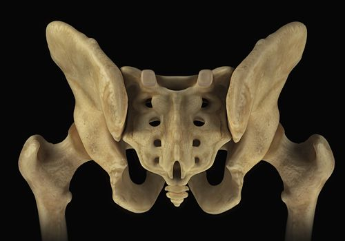 Rear view of the male pelvis, sacrum and hip joints