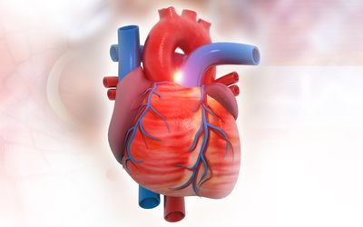 Anatomy of Human Heart on medical background