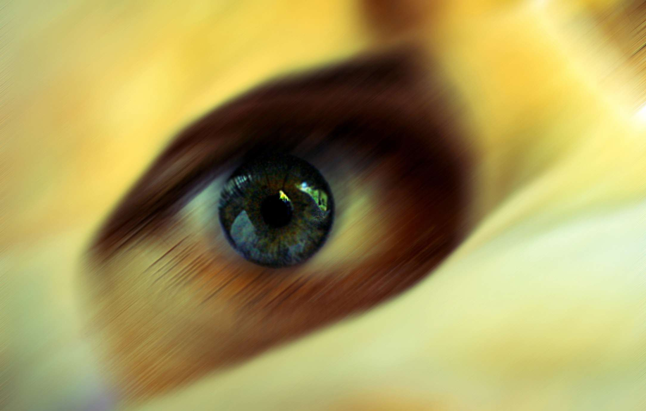 Detail of a person's eye