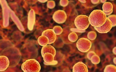 Mycoplasma bacteria