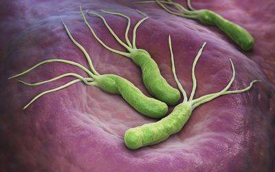 An illustration of the Helicobacter Pylori bacteria