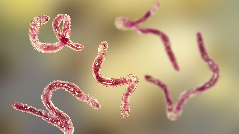 pinworm giardiasis