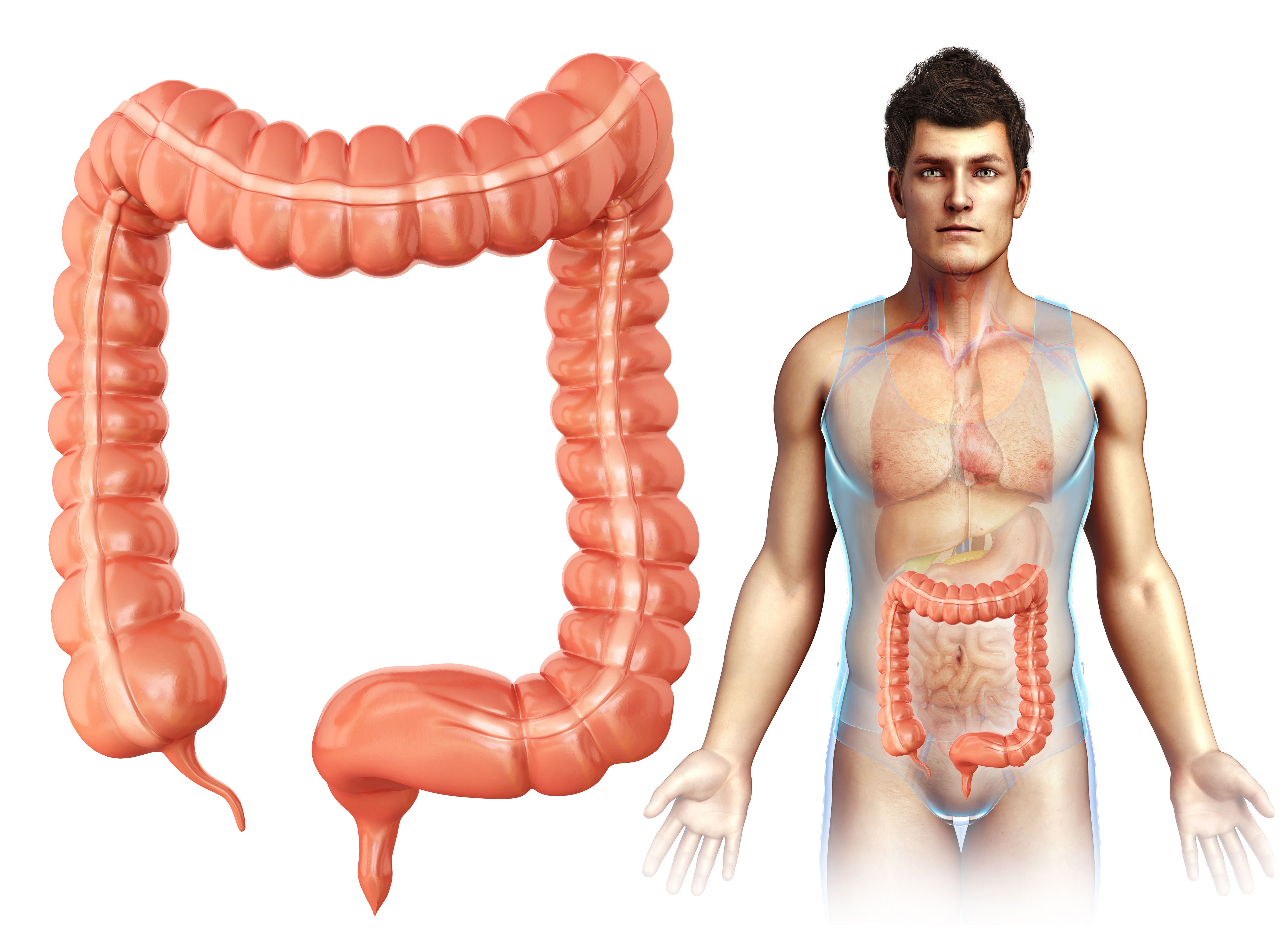What Is Function Of The Colon