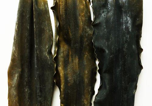 Kombu strips on a white background