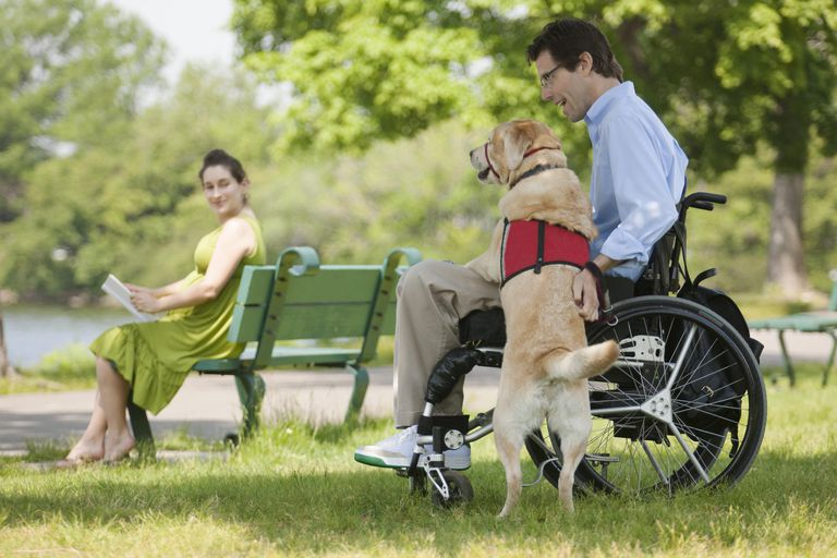 Man in wheelchair with spinal cord injury talking with service dog with his pregnant wife in the background
