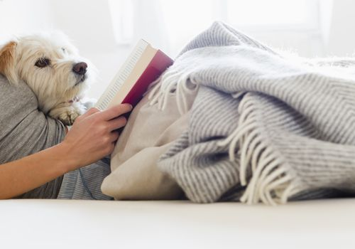 A person reading in bed with their dog