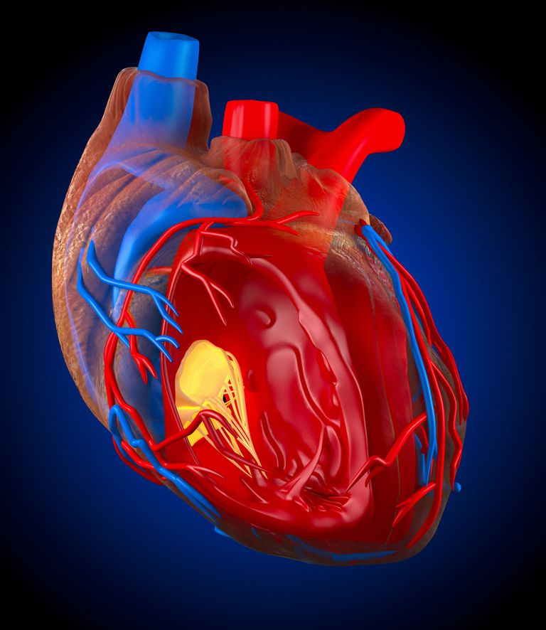 Structure of a human heart, artwork