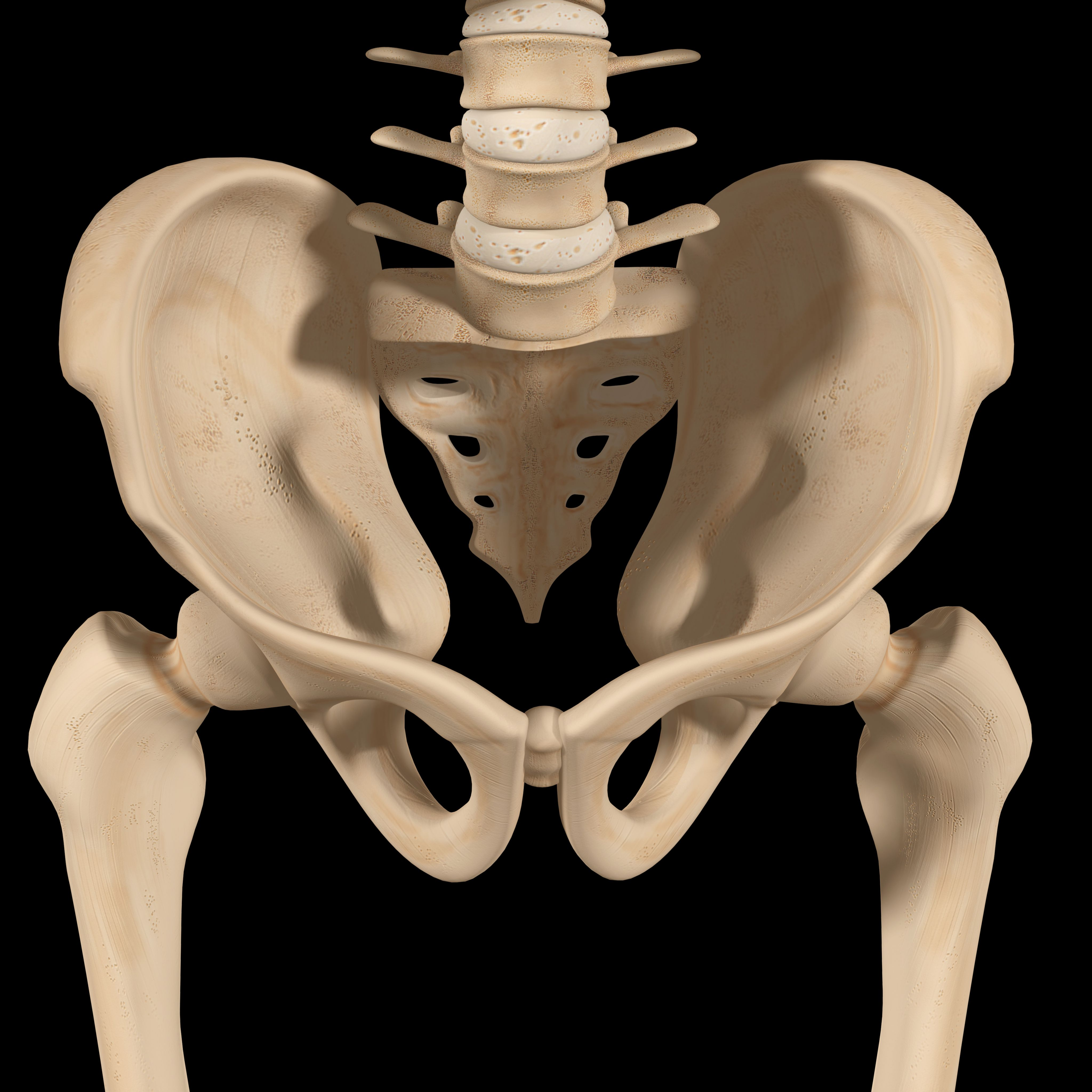 A skeleton of the pelvis, sacrum, lumbar spine, hip joints and femur bones.