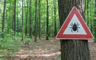 Beware of ticks sign in woods