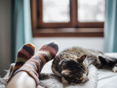Cat sleeping on bed at owner's feet