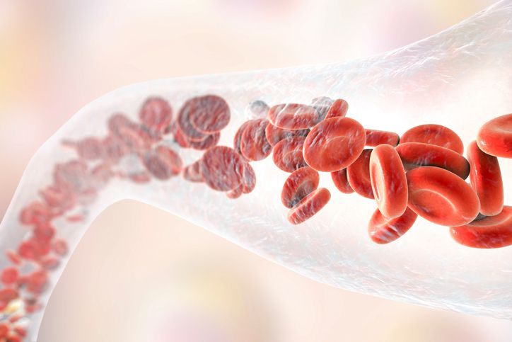 blood vessel with blood cells