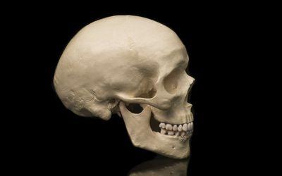 Cranium and Skull