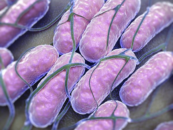 This is an electron micrograph of Salmonella bacteria.