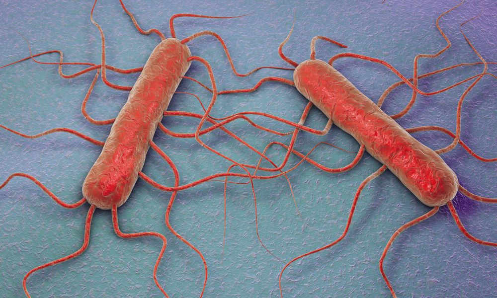 Listeria monocytogenes, illustration