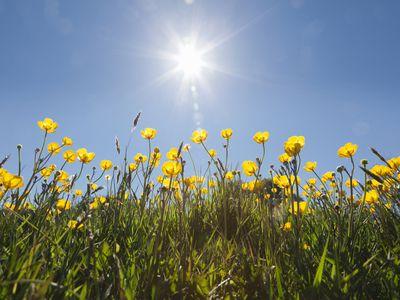 Sunlight shining on yellow flowers