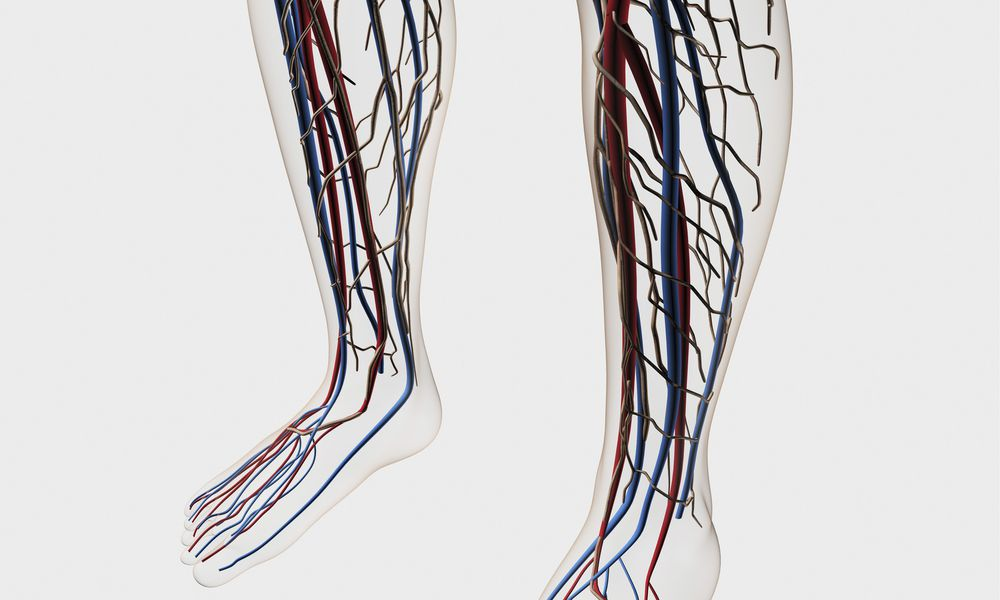 Medical illustration of arteries, veins and lymphatic system in human legs and feet. - stock illustration
