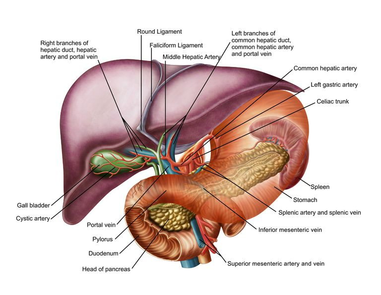 What Is Portal Hypertension