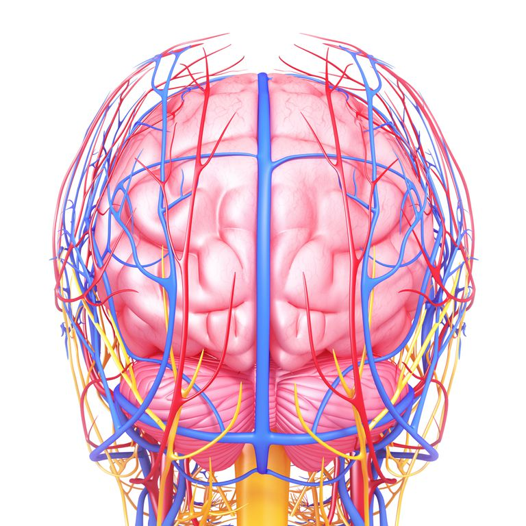 A Subdural Hematoma Is A Bleed Into The Brain