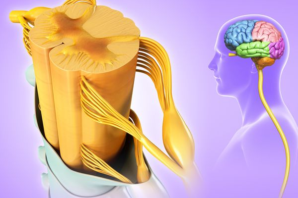 Transverse Myelitis May Be the First Sign of MS