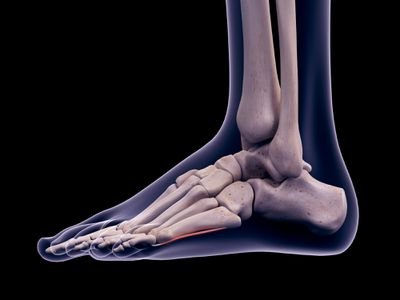Anatomy of an ankle illustration
