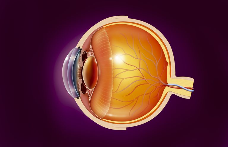 illustration of the Anatomy of an eye