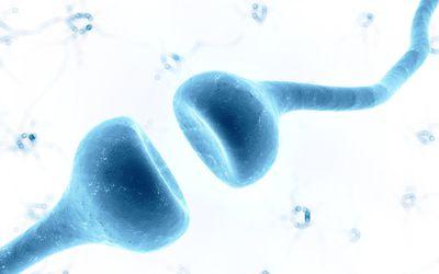 Neuron illustration