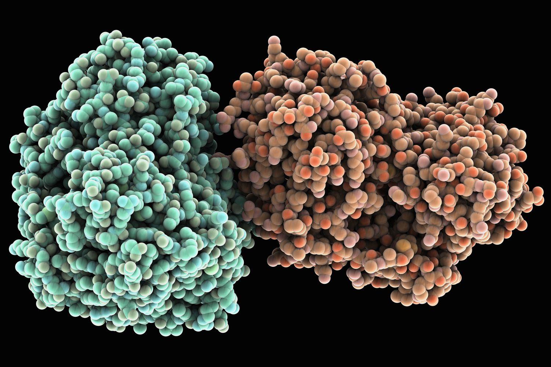 Hepatitis C: Symptoms, Causes, Diagnosis, Treatment