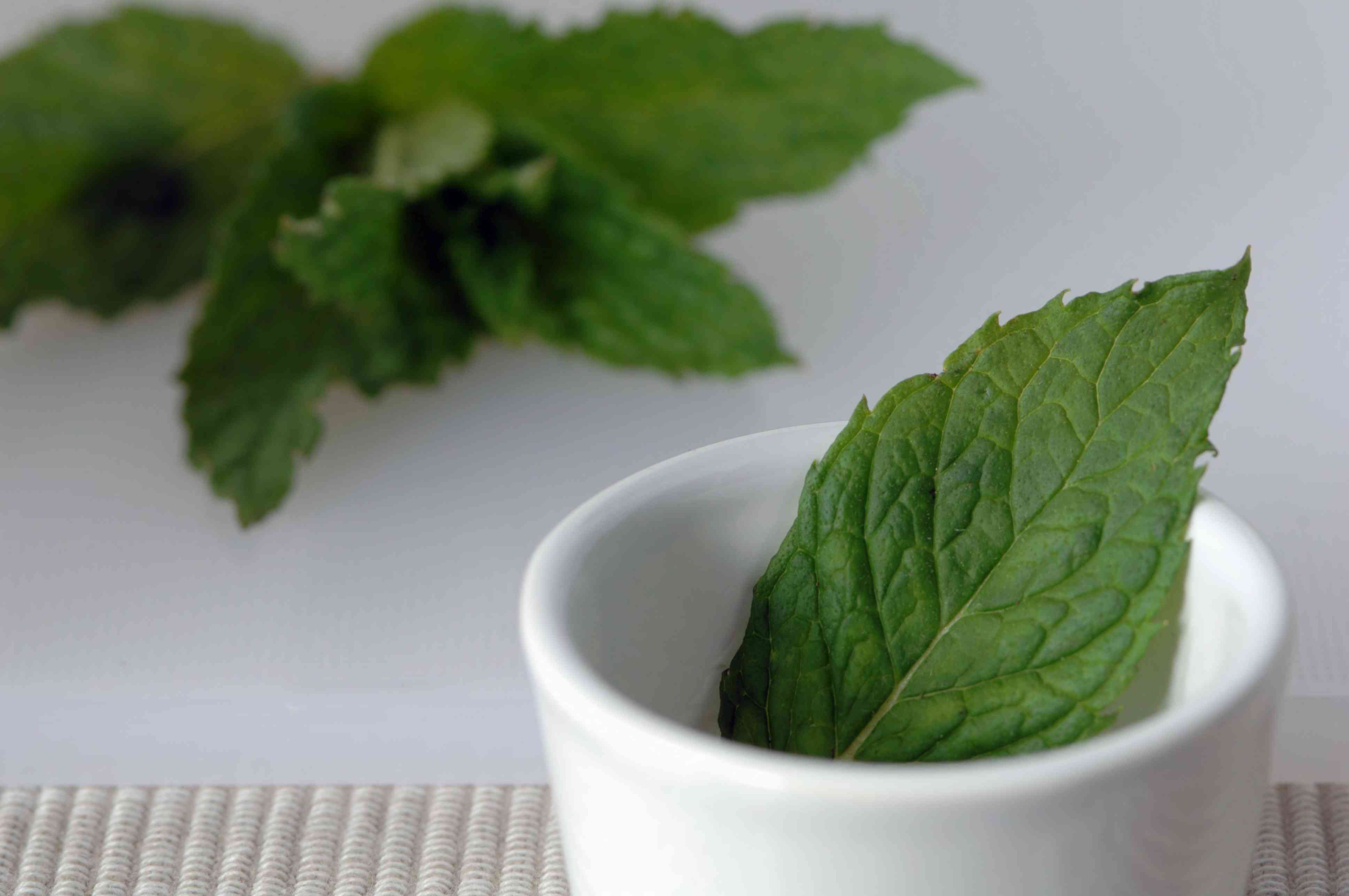 Peppermint leaves on a white counter and in a white bowl
